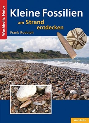 Kleine Fossilien am Strand entdecken, F. Rudolph