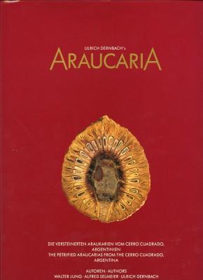 Araucaria, Dernbach U.
