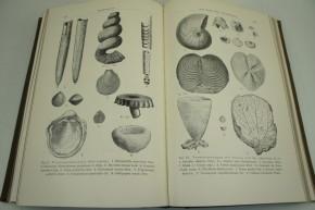 KAYSER E. - Lehrbuch der Geologie, II. Teil: Geologische Formationskunde.